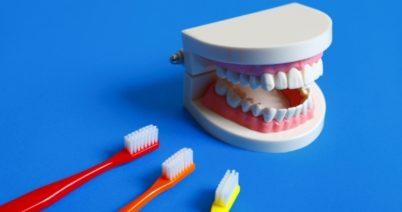 お口の健康が免疫力に関係している⁉️歯磨きで感染予防!